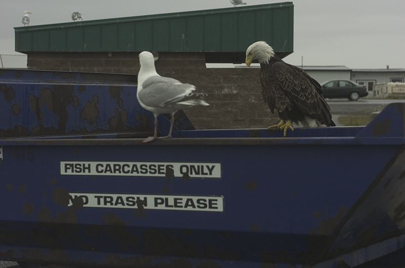 Eagle-dumpster.jpg